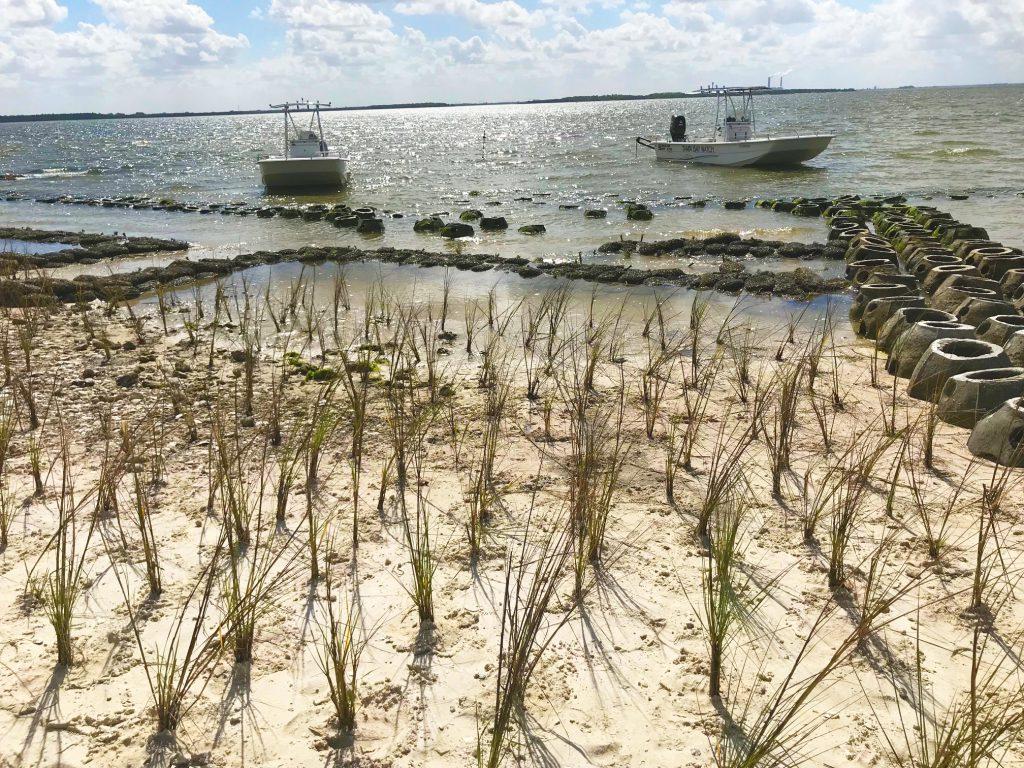 image: marsh grass on shoreline