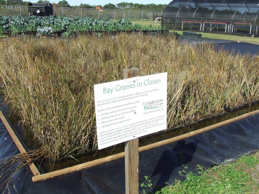 image: bgic school marsh plot