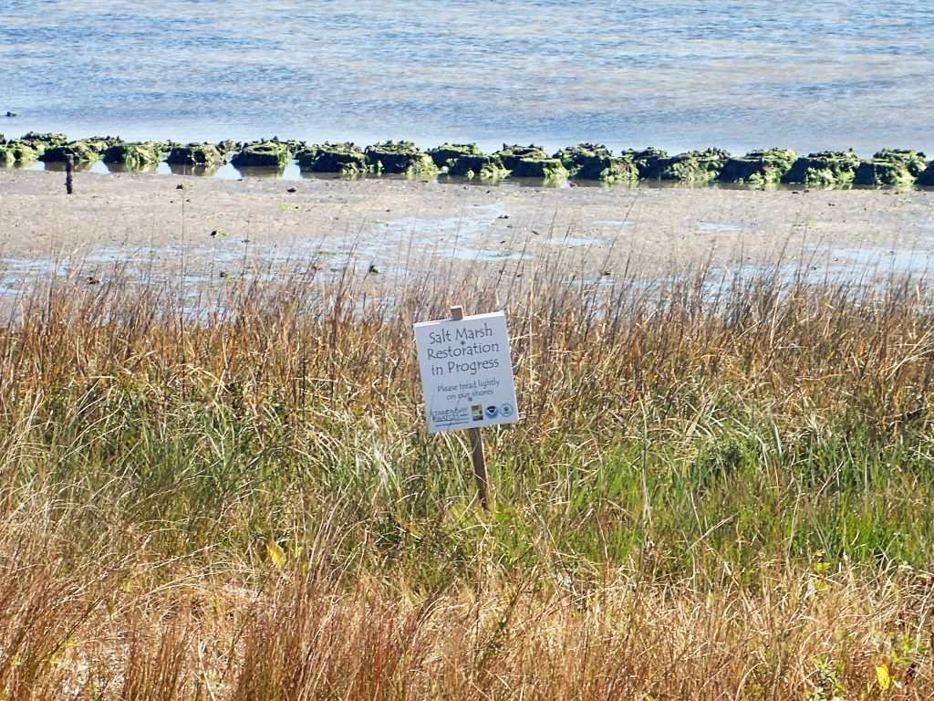 image: salt marsh and oyster bags on shoreline