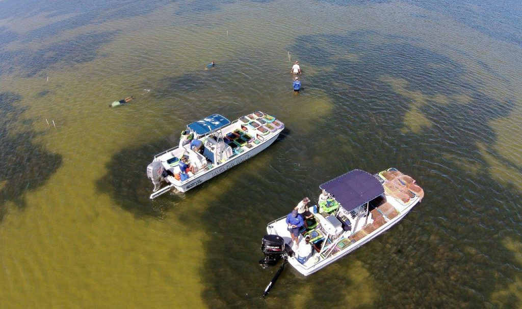 image: aerial, TBW boat in seagrass beds