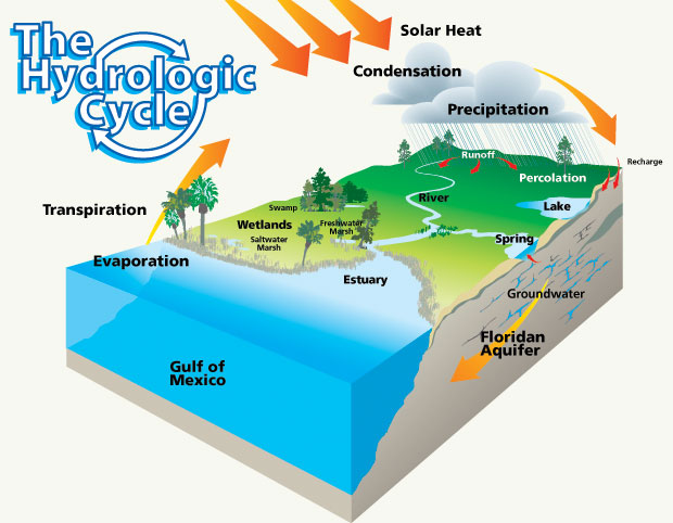 infographic about hydrologic cycle