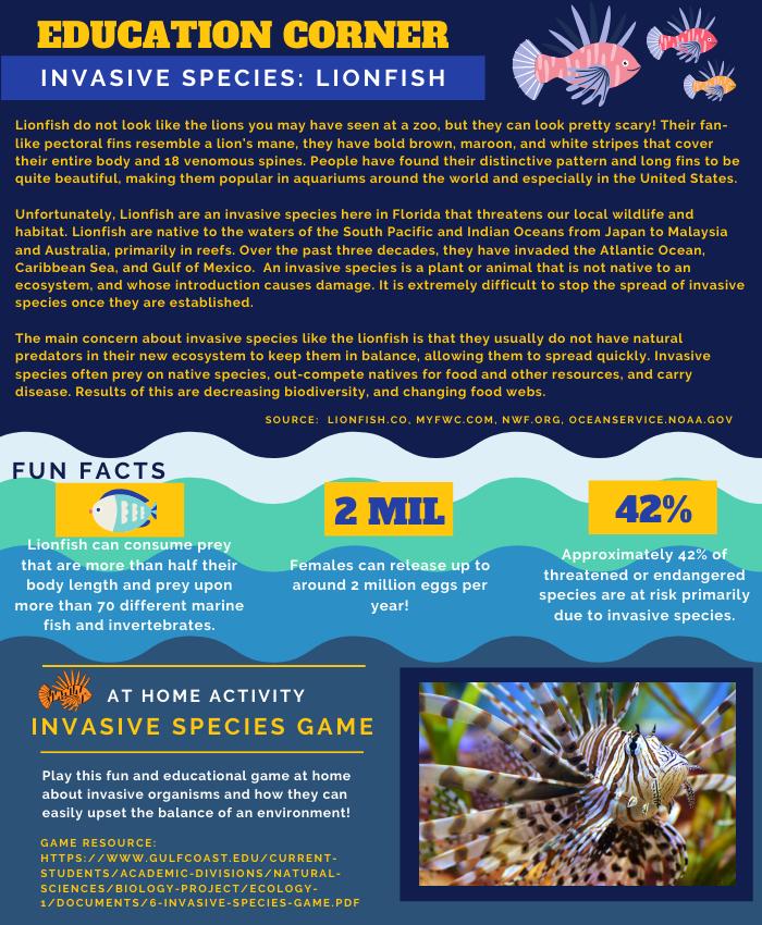 image: education corner: lionfish