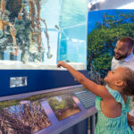 image: child at touch tank DC